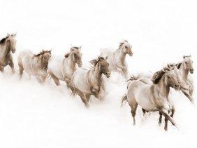 Robert Dawson - The Herd