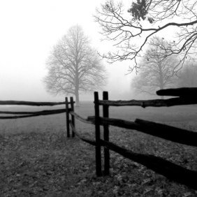 Harold Silverman. Fence In The Mist