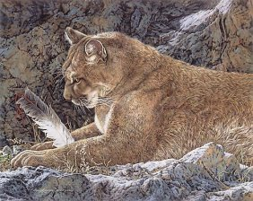 Judy Larson - Paws And Reflect