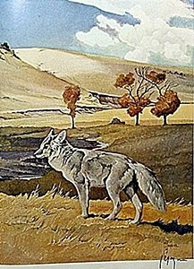 """Lithograph """"the Coyote"""" By Artist Francis Lee Jaques"""