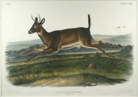 J.W. AUDUBON, LONG TAILED DEER, LITHO, C.1845