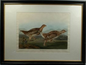 J.J. AUDUBON, SHARP-TAILED GROUSE, ENGRAVING