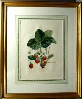FRAISIER ANANAS, STIPPLE ENGRAVING, 1780