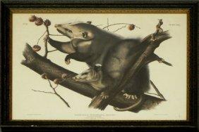 """John James Audubon (1785-1851), """"Virginian Opossum,"""