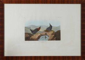 "John James Audubon (1785-1851), ""american Water Ouzel,"""