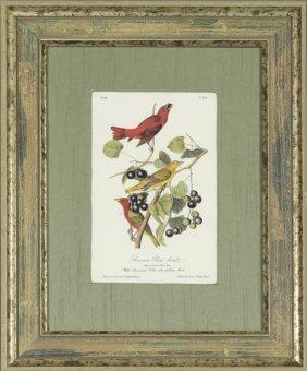 """John James Audubon (1785-1851), """"summer Red-bird,"""" No."""