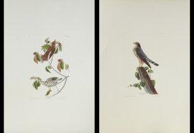 John James Audubon (1785-1851), Ten Prints, Consisting