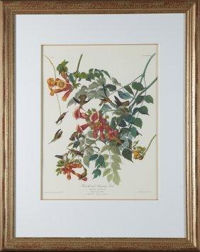 "John James Audubon (1785-1851), ""ruby-throated"