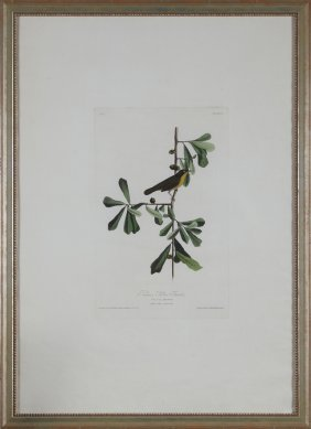 "John James Audubon (1785-1851), ""roscoe's Yellow"
