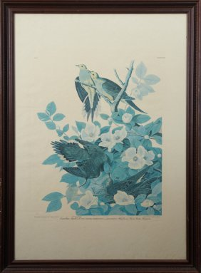 """John James Audubon (1785-1851), """"carolina Turtle Dove"""""""