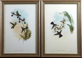 """J. Gould And H.c. Richter, """"erythronota Elegans,"""" And"""