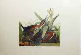 "John James Audubon (1785-1851), ""green Heron,"" No. 67,"