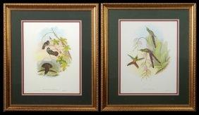 "J. Gould And H.c. Richter, ""petasophora Delphinae,"" And"