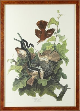 "John James Audubon (1785-1851), ""ferruginous Thrush,"""
