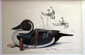 Lithograph - Pintail - James P. Fisher