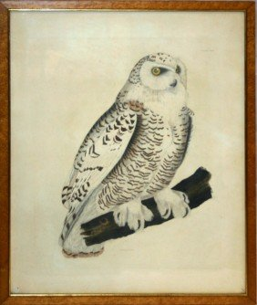 "COLORED LITHOGRAPH, SNOW OWL, 25"" X 20"""