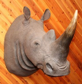 Reproduction Fiberglass White Rhino Shoulder Mount