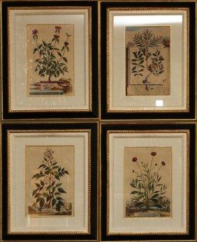 After Abraham Munting Botanical Prints Four
