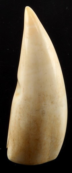 Pre-ban Whale Tooth Ivory Unworked 4.5 Inches Tall