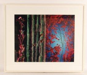 "Ektacolor Print, ""abinitio,"" Brian Oglesbee"