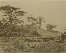 A Cane Shed On A Sugar Estate, Trinidad, West Indies