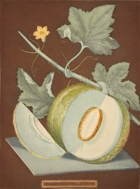 Green Melon On Brown Background By George Brookshaw