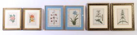 6 Antique Hand Colored Botanical Engravings