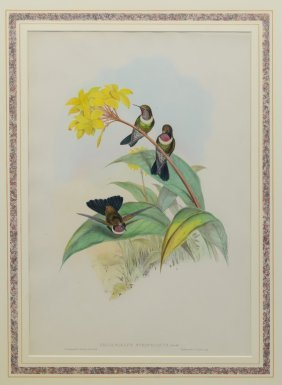 John Gould & Henry Constantine Richter (british, 19th