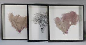 Set 3 Framed Coral Leaf Formations