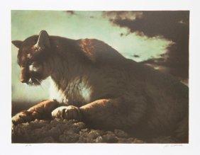 Nancy Glazier, Cougar, Lithograph