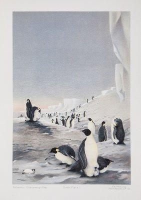 National Antarctic Expedition 1901-04. - Natural