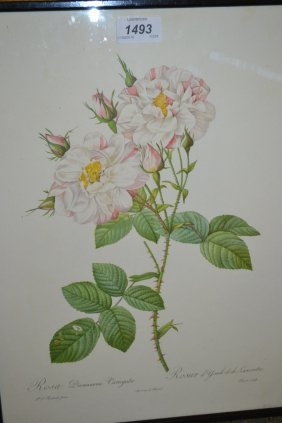 Set Of Three Redoute Framed Prints Of Roses Together