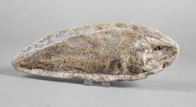 Versteinerter Fisch