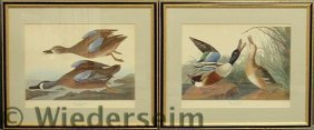 Pair Of Framed And Matted Audubon Duck Prints- �B