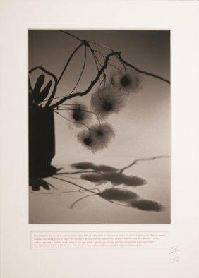 João Penalva (born 1949) Master Nanyo's Evening Shadow,