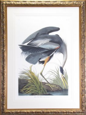 "After Jj Audubon Print ""great Blue Heron"""