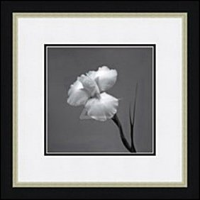 Iris Ii By Artin