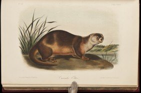 Volume 3 Of Audubon's Quadrupeds 1854 Octavo Edn.