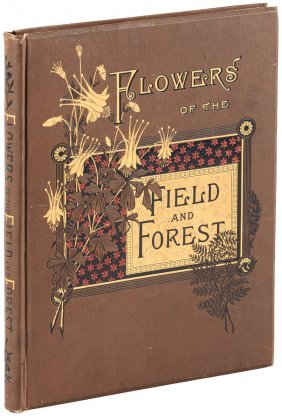 Flowers Of The Field And Forest, Color Plates, 1886