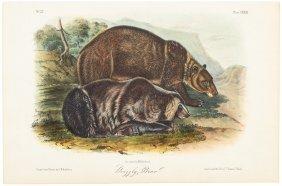 Plates From Audubon's Quadrupeds