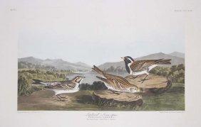 John James Audubon, Plate 73: Lapland Longspur