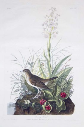 John James Audubon, Plate 164: Tawny Thrush