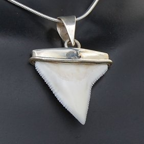 Shark Ivory & Sterling Necklace