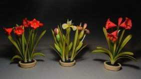 Three Tinted Ivory Potted Bulb Plants