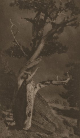 ANNE BRIGMAN (American, 1869-1950) The Dying Ced