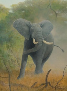 Douglas Allen (american, B. 1935) African Elepha