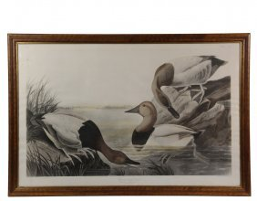 "John James Audubon - ""canvas Backed Duck"" (plate Ccci)"